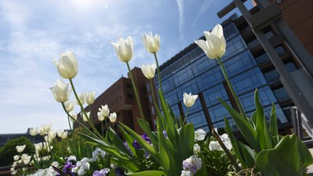 UAMS building with tulips